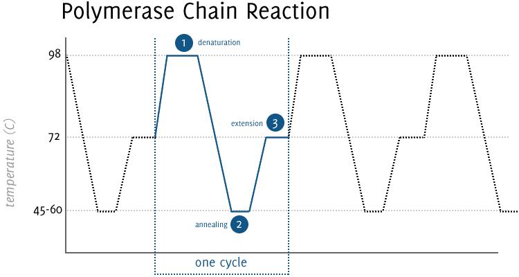 pcr temperature diagram wiring diagram passmerritt genomics pcr temperature diagram